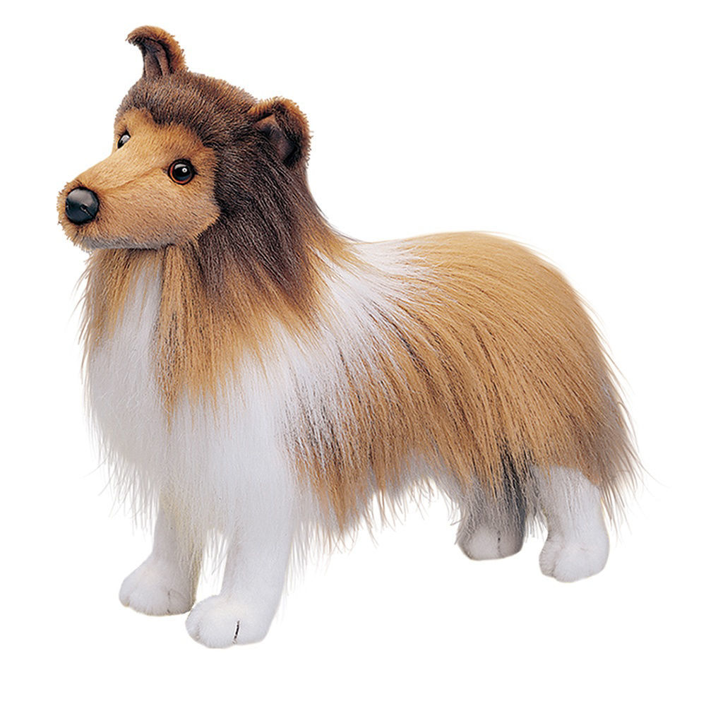 Picture of Dixie Sheltie